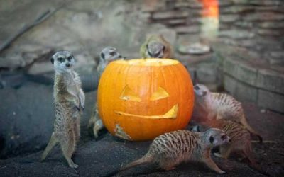 Enter to Win 2 Tickets to the Boo Bashat theBuffaloZoo