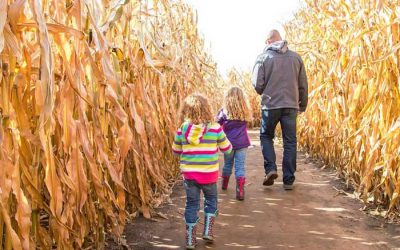 Enter to Win Admission & Pumpkins from the Cambria Corn Maze