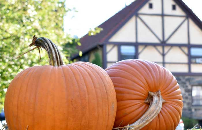 5 Exciting Ways to Explore the Roycroft Campus this Fall