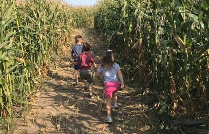5 Reasons to Visit Cambria Corn Maze